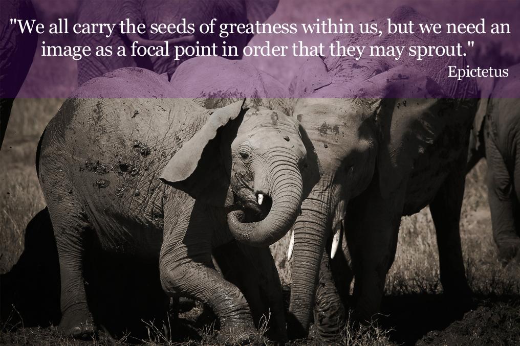 Elephant Quote